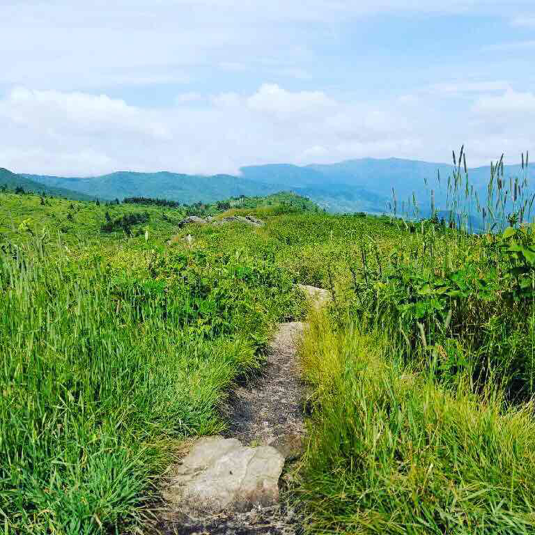 Blue Ridge Parkway -  where is your path taking you today?