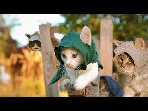 Assassin Cat