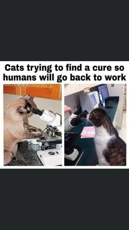 Cat's trying to find a cure